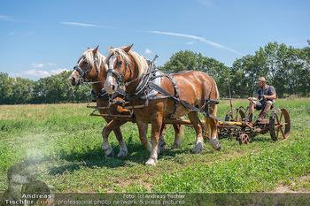 Biofeldtage Tag 2 - Seehof, Donnerskirchen - Sa 07.08.2021 - Feldarbeit Landwirtschaft mit Pferden (Haflinger), früher, hist18