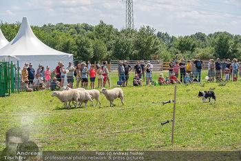 Biofeldtage Tag 2 - Seehof, Donnerskirchen - Sa 07.08.2021 -  80