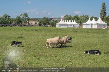 Biofeldtage Tag 2 - Seehof, Donnerskirchen - Sa 07.08.2021 -  92