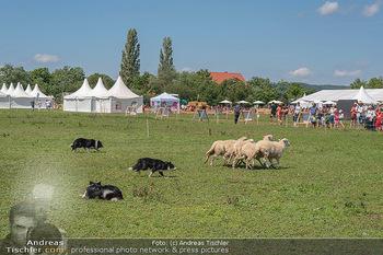 Biofeldtage Tag 2 - Seehof, Donnerskirchen - Sa 07.08.2021 -  93