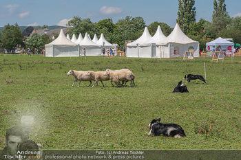 Biofeldtage Tag 2 - Seehof, Donnerskirchen - Sa 07.08.2021 -  95