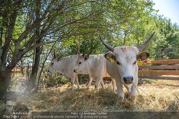 Biofeldtage Tag 2 - Seehof, Donnerskirchen - Sa 07.08.2021 - Rinder, Kuh, Tiere, artgerechte Tierhaltung, Kühe, Hörner106