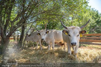 Biofeldtage Tag 2 - Seehof, Donnerskirchen - Sa 07.08.2021 - Rinder, Kuh, Tiere, artgerechte Tierhaltung, Kühe, Hörner107