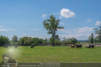 Biofeldtage Tag 2 - Seehof, Donnerskirchen - Sa 07.08.2021 - Rinder, Kuh, Tiere, artgerechte Tierhaltung, Kühe, Weide, Wiese111