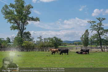Biofeldtage Tag 2 - Seehof, Donnerskirchen - Sa 07.08.2021 - Rinder, Kuh, Tiere, artgerechte Tierhaltung, Kühe, Weide, Wiese112