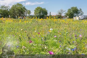 Biofeldtage Tag 2 - Seehof, Donnerskirchen - Sa 07.08.2021 - Naturblumenwiesen, Blumen, Wiese, Blumenwiese154
