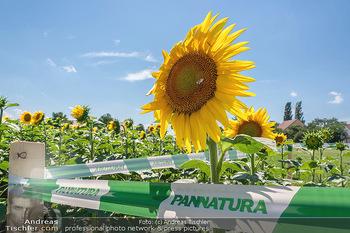 Biofeldtage Tag 2 - Seehof, Donnerskirchen - Sa 07.08.2021 - Pannatura Sonnenblume165