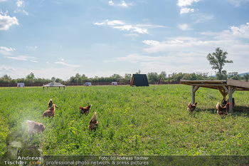 Biofeldtage Tag 2 - Seehof, Donnerskirchen - Sa 07.08.2021 - Freilandhühner, Bioeier, Eier, artgerechte Tierhaltung, frei, H238
