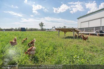 Biofeldtage Tag 2 - Seehof, Donnerskirchen - Sa 07.08.2021 - Freilandhühner, Bioeier, Eier, artgerechte Tierhaltung, frei, H239