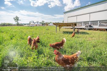 Biofeldtage Tag 2 - Seehof, Donnerskirchen - Sa 07.08.2021 - Freilandhühner, Bioeier, Eier, artgerechte Tierhaltung, frei, H240