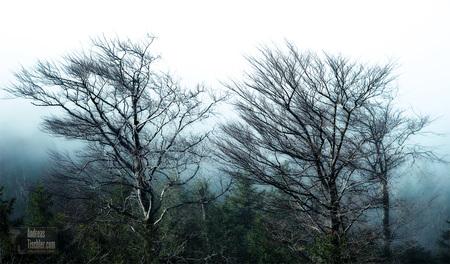 Österreich Naturfotografie Landschaft Naturfotos Idylle Tourismus Werbung Urlaub Holiday Ferien Wandern Erlebnis - Bäume im Nebel, Herbst, Fotos von Österreichs schönsten Seite by Andreas Tischler