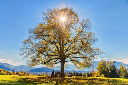 Salzburg Baum Maria Alm Sonne blauer Himmel Bankerl Landschaft Österreich Natur Tourismus Werbung Austria - Salzburg Baum Maria Alm Sonne blauer Himmel Bankerl Urlaub Relax by Andreas Tischler