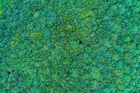 Österreich Natur Landschaft Tourismus Winter Sommer Herbst Frühling Urlaub Seen Berge Luftbild Luftaufnahme DrohnenfotosWald von oben, Laubwald, natur, gesund, grün, Forstwirtschaft, Bundesforste - Wald von oben, Laubwald, natur, gesund, grün, Forstwirtschaft,  by Andreas Tischler